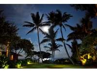 Moon light over garden area thumb