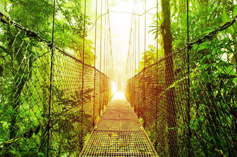 Rain forest tours available