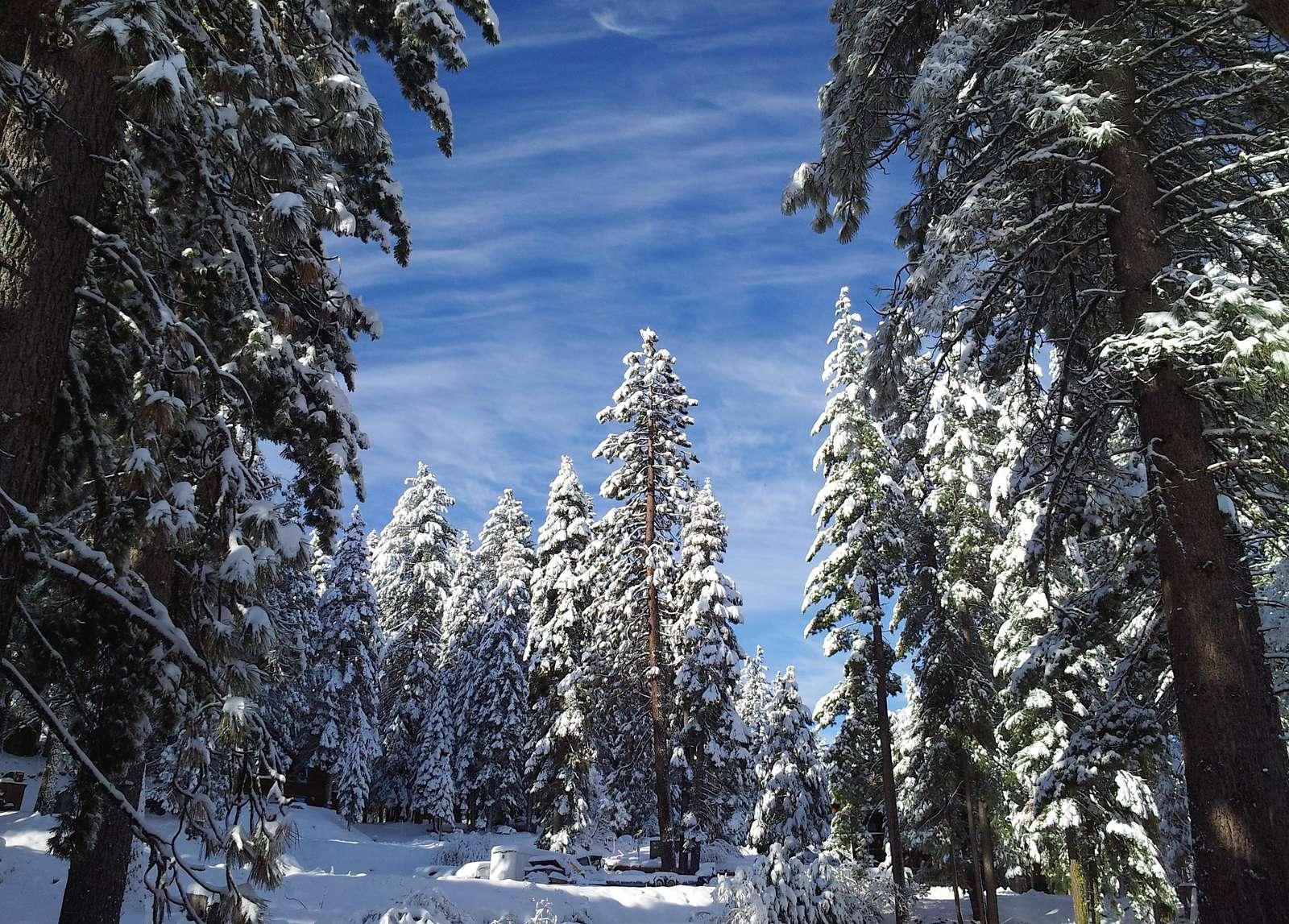 Patio Winter View