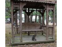 Gazebo at Blue Spruce with Kitty thumb