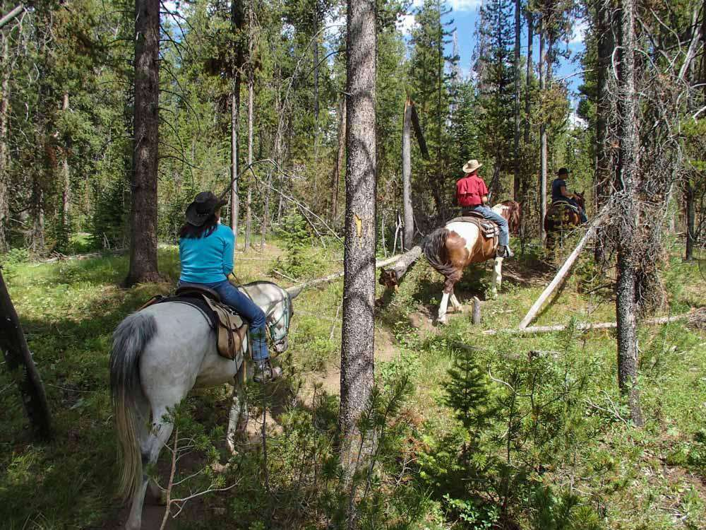 Horseback ride on the valley floor.