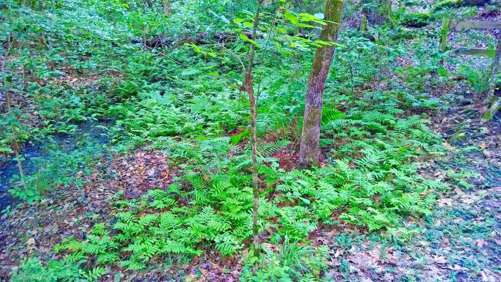 I love the fern groves. The temperature seems considerably cooler in these areas.