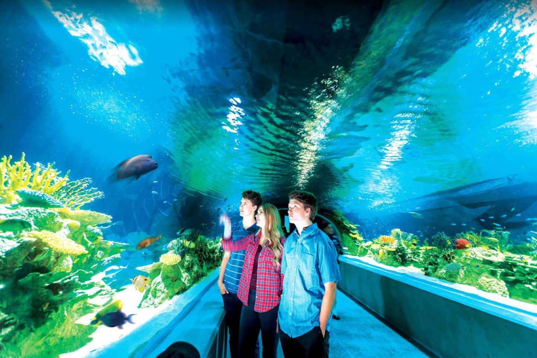 Check Out Odysea Aquarium.
