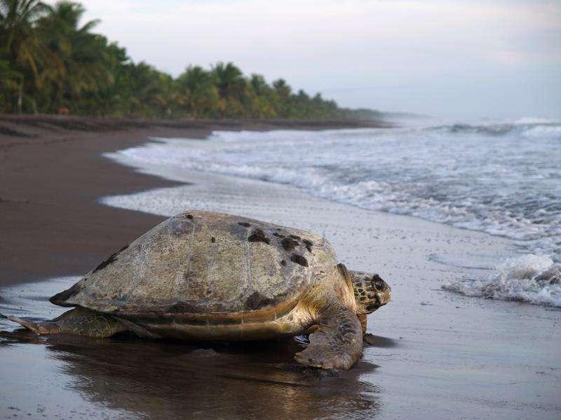 Turtle nesting tours