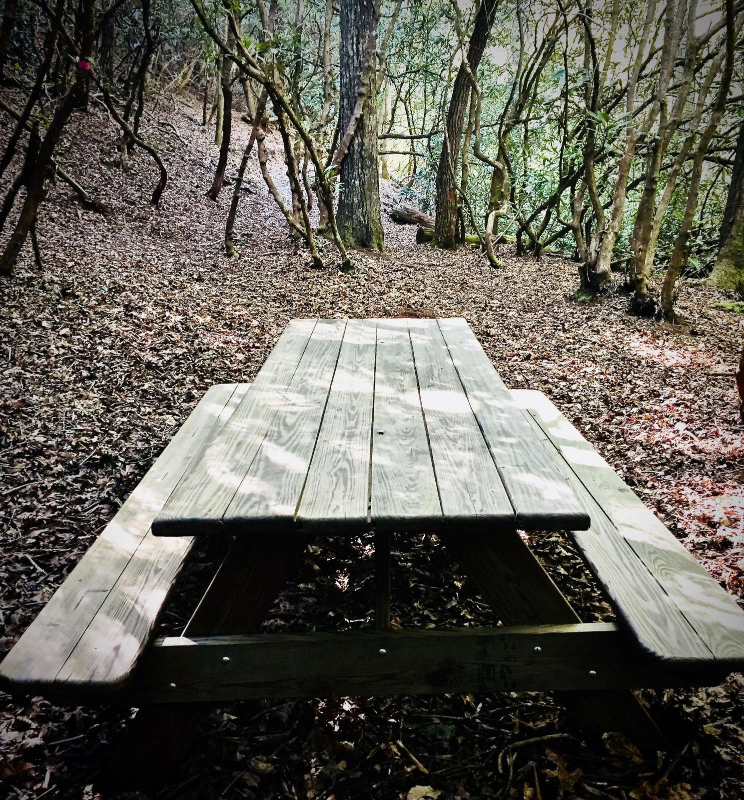 PicNic Table at the base of your Private nature Trail offers the ideal place to relax and enjoy the sounds of the stream.