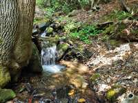 The Melodious Creek meanders along side the Cabin and the soothing sounds of flowing water are ever present! thumb