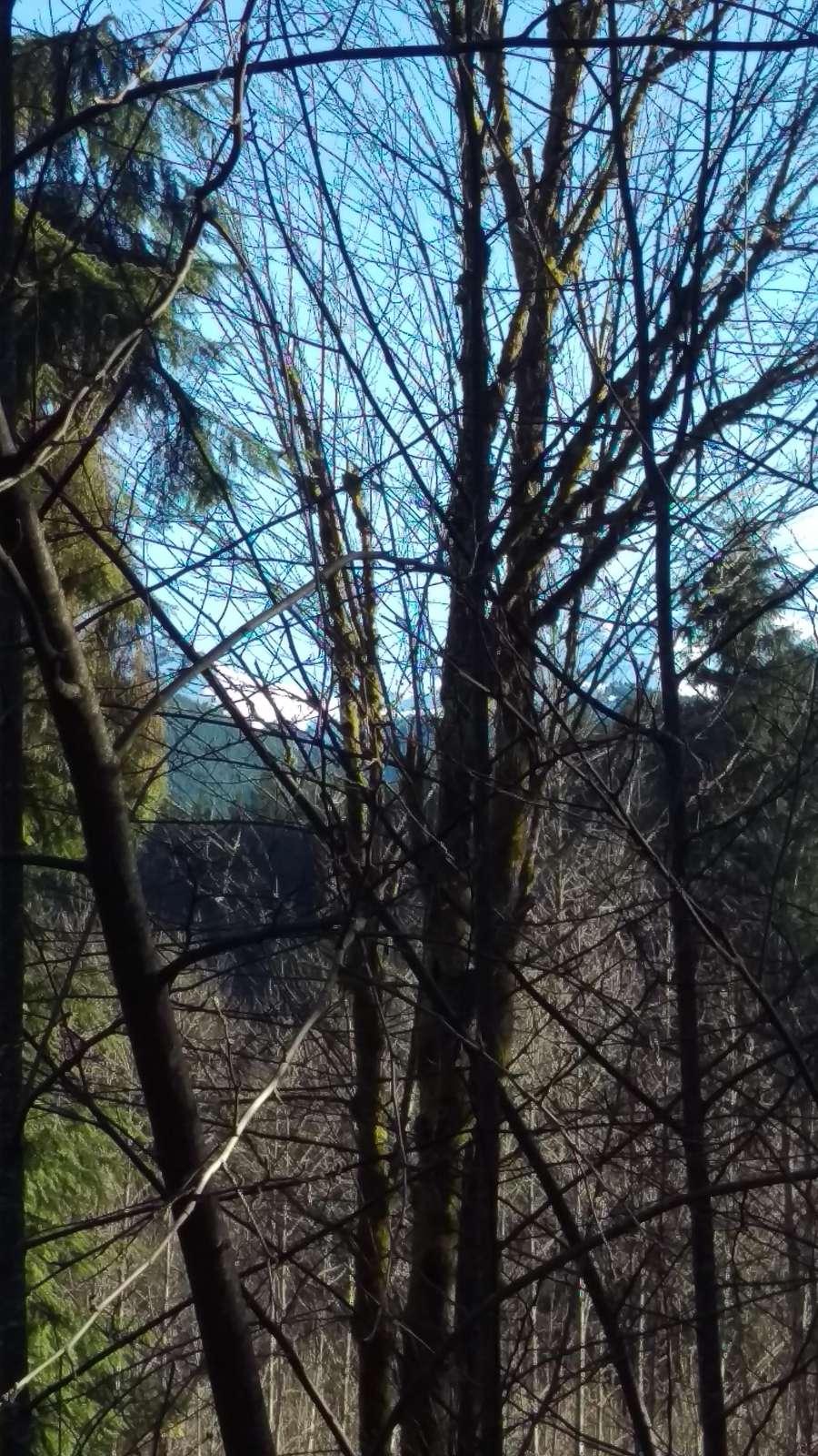 Mt Baker View - Winter