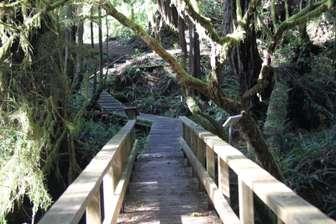 Rainforest trails nearby thumb