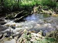 Trout Stocked and Hatchery Supported, Alarka Creek thumb
