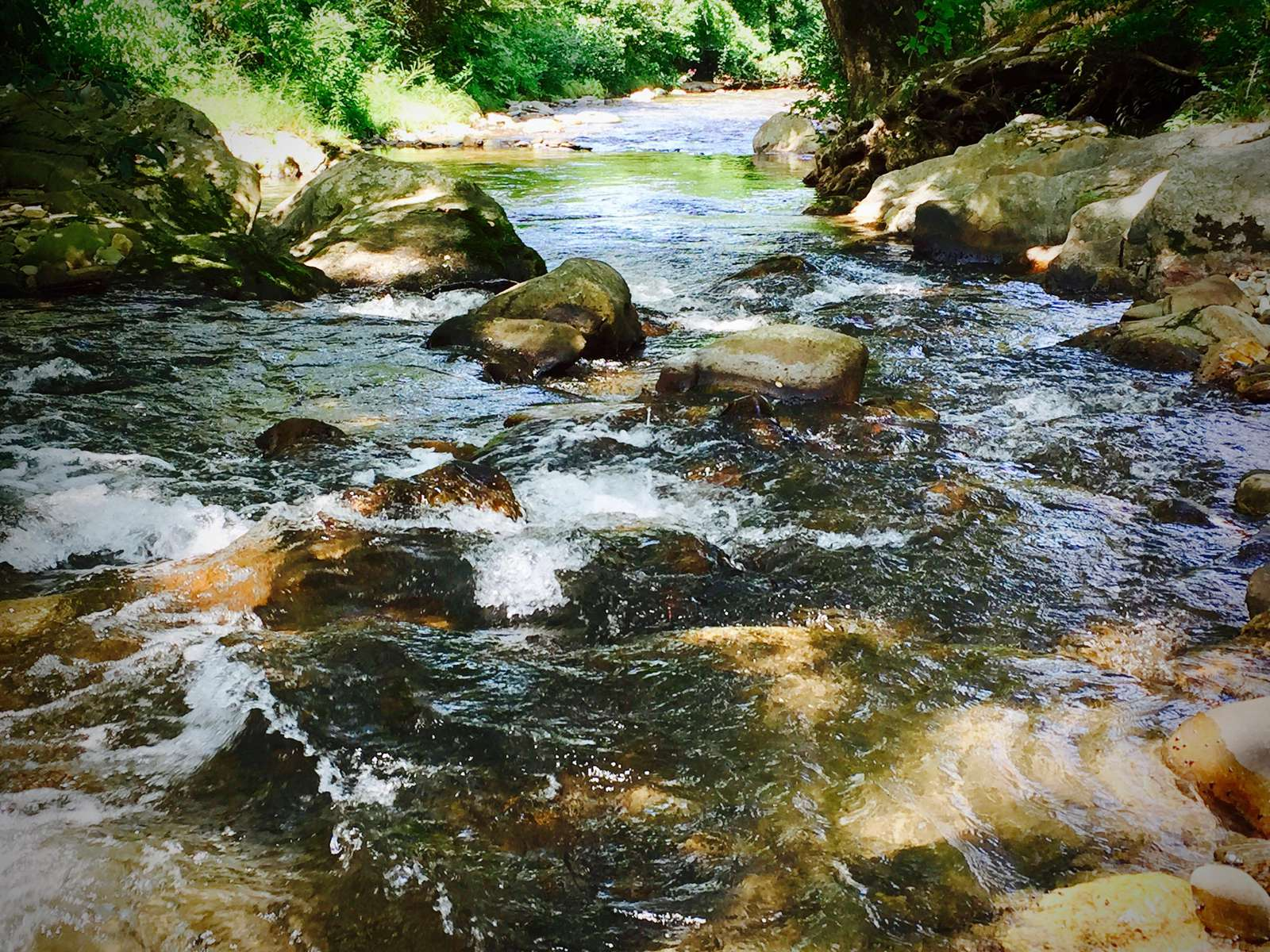 "Alarka Creek is Crystal Clear! The ideal ""Catch and Eat"" Trout Stream..."