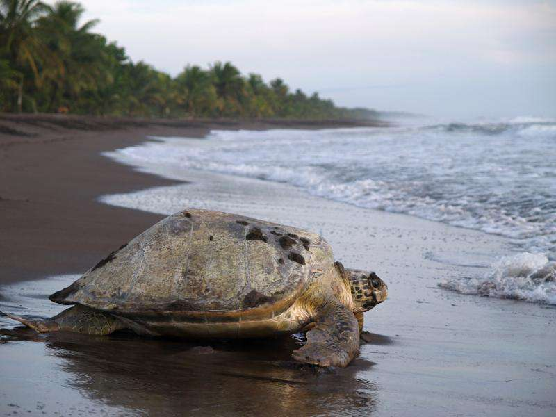 Turtle tours nearby!