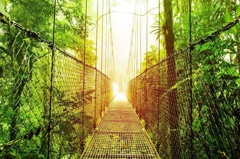 Hanging bridge tour in the rain forest
