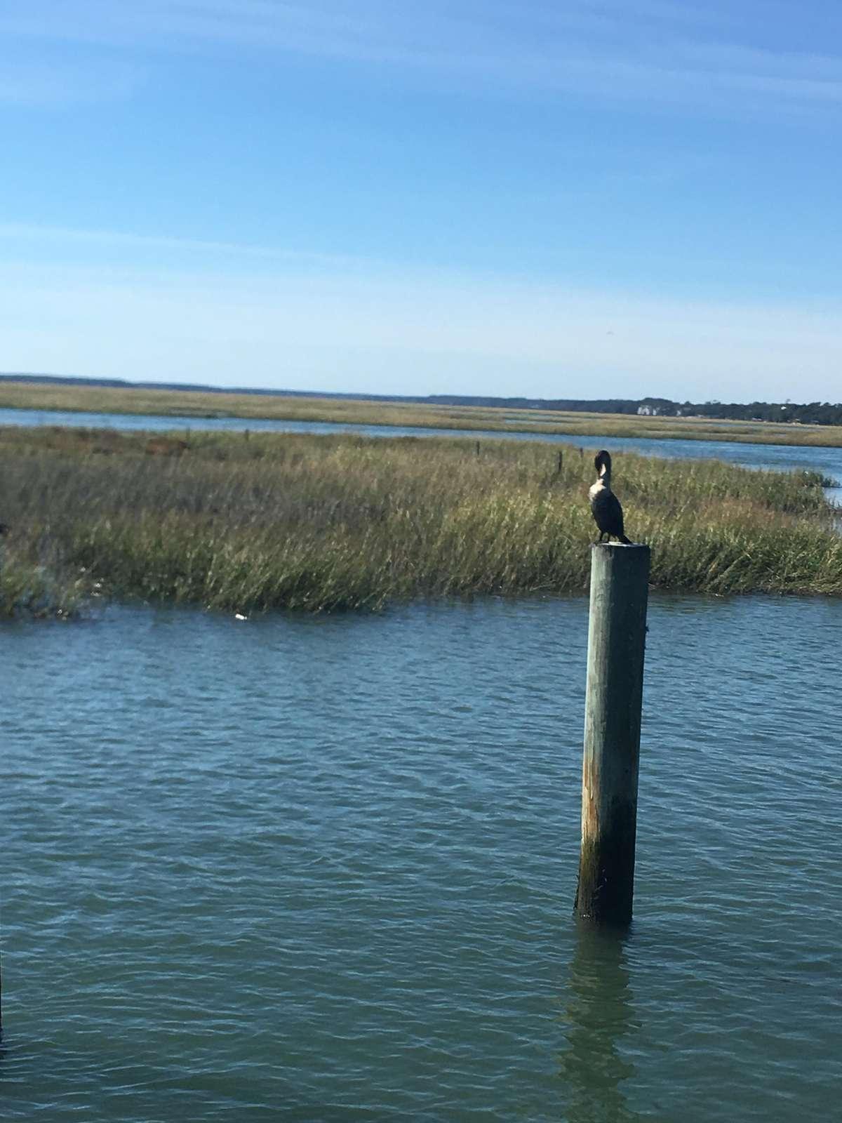 Marshwalk Murrells Inlet