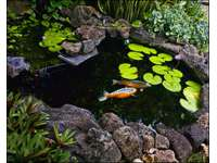 koi pond in garden area thumb