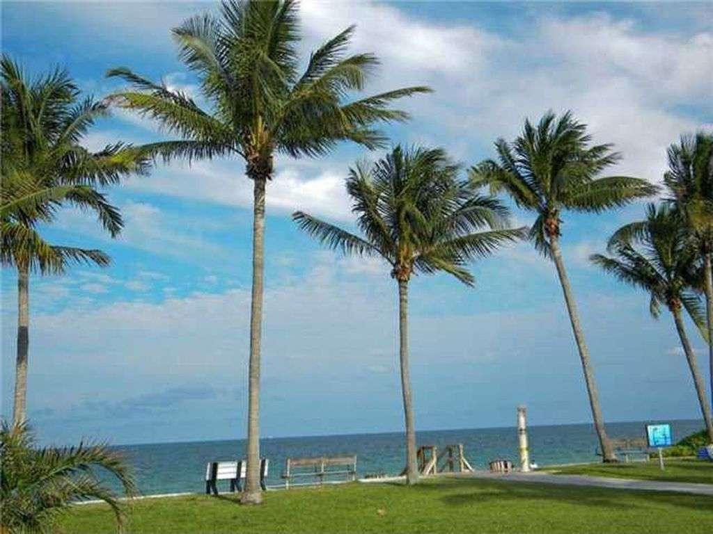 Palm trees along beach