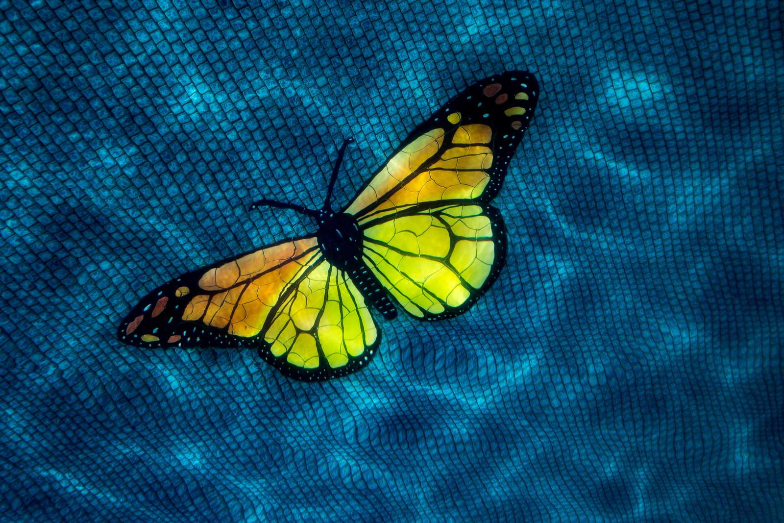 Cute colorful butterfly art ardorns the various communal areas