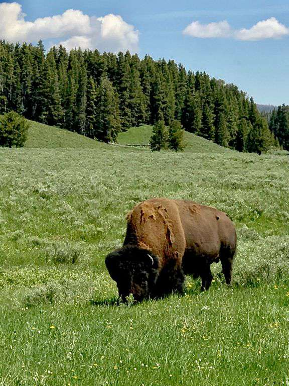 The west entrance to Yellowstone Park is only 90 miles from the condo
