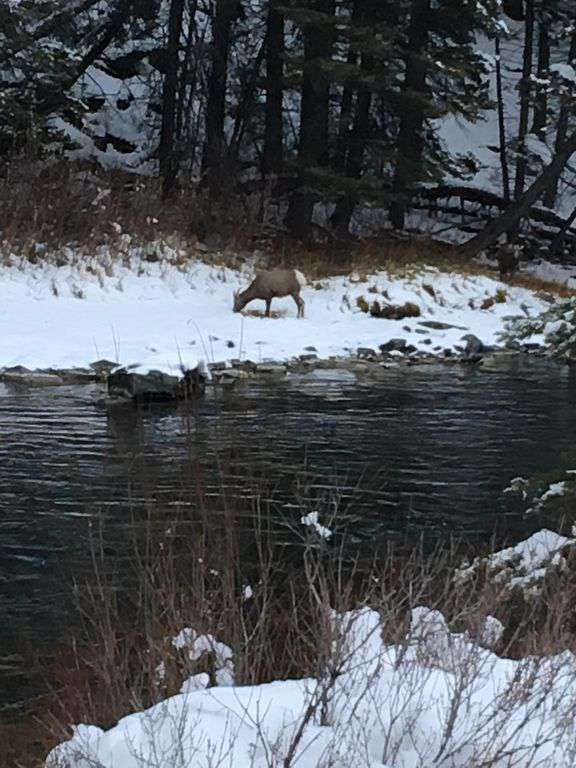 Winter in Bozeman! 15 minutes up on the Gallatin River.