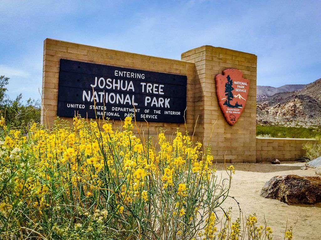 30 minutes to Joshua Tree National Park