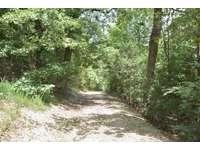 Serene walking trails thumb