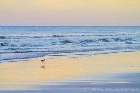 Pelican Roost - SFH
