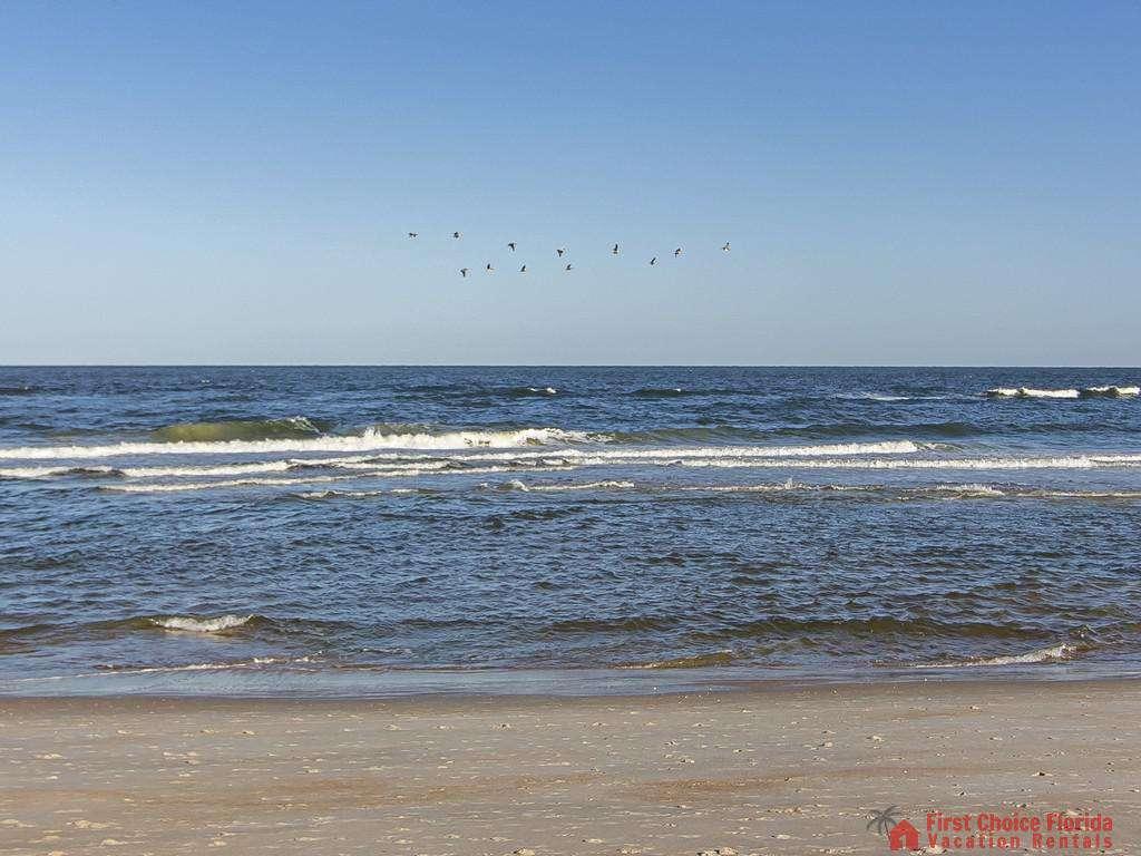 See Ray Shores - Atlantic Ocean
