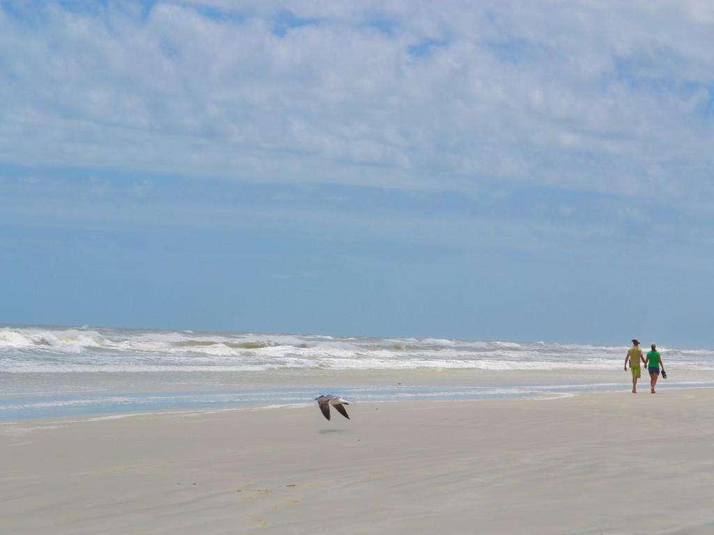 Purple Pelican - Beach