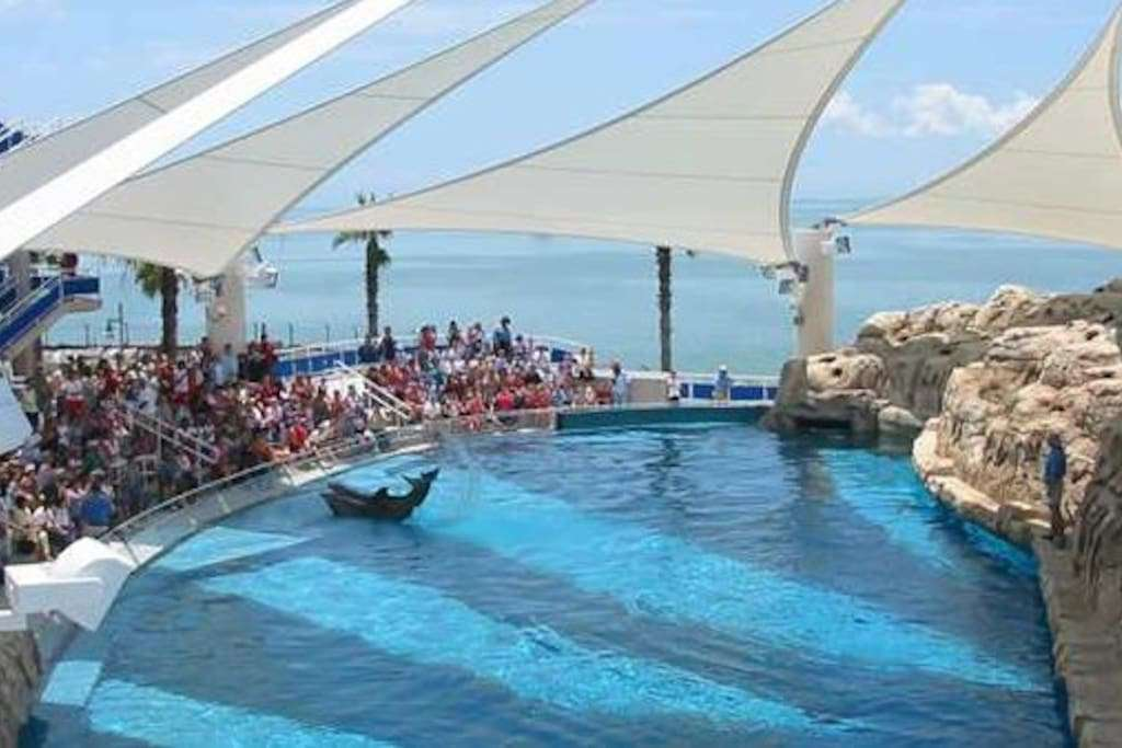 Texas State Aquarium is rated as one of the best in the world