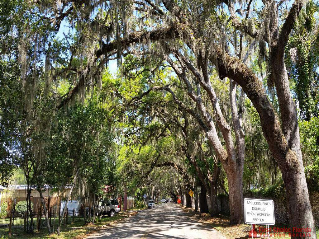 Magnolia Avenue St. Augustine
