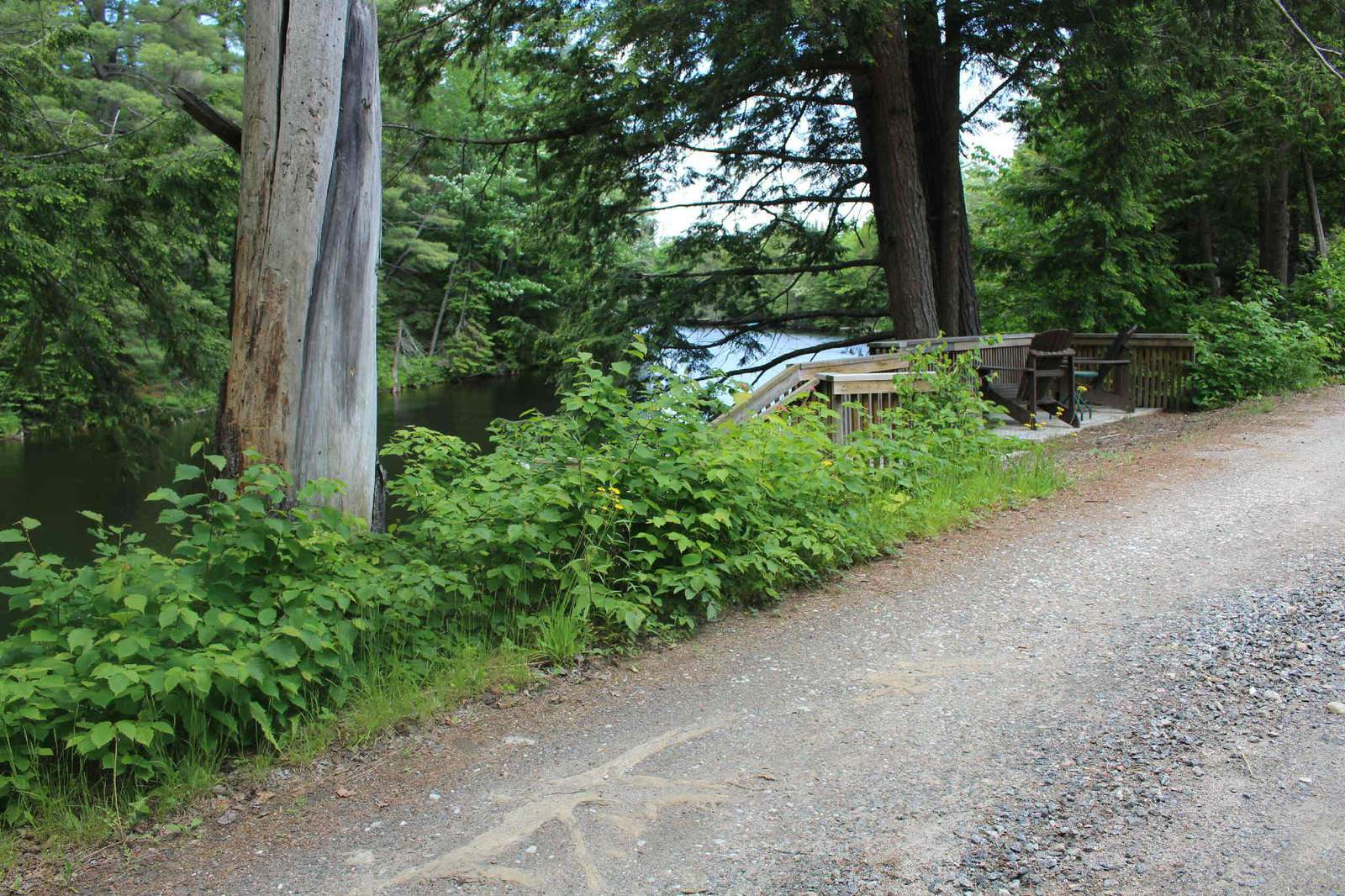 Road between water and cottage